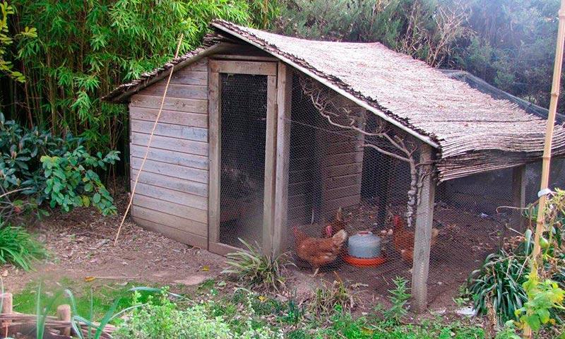Construcció d'un galliner al jardí