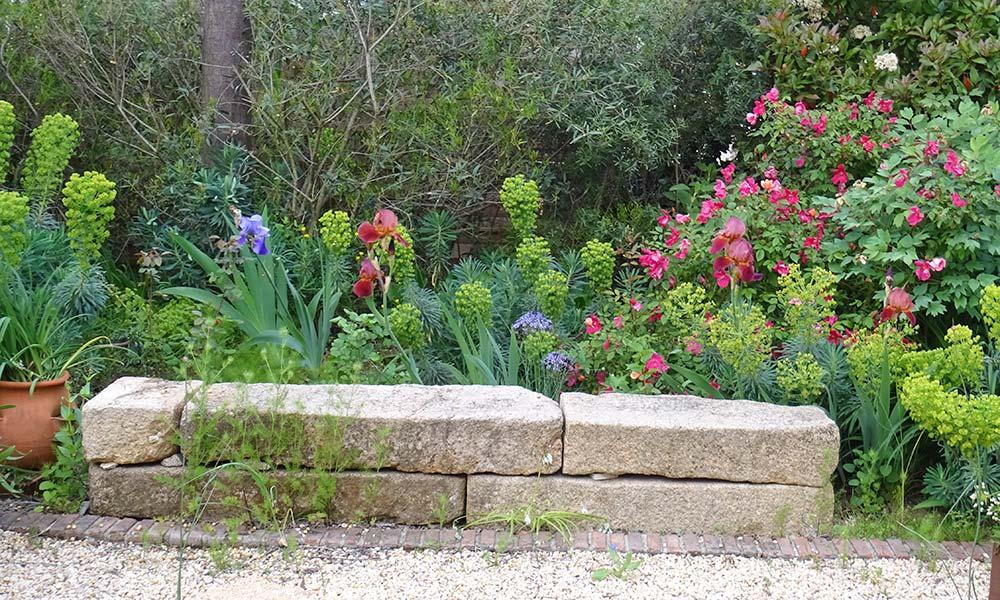 Plantes que es ressembren
