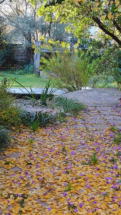 Bedoll i flors de bugenvillea