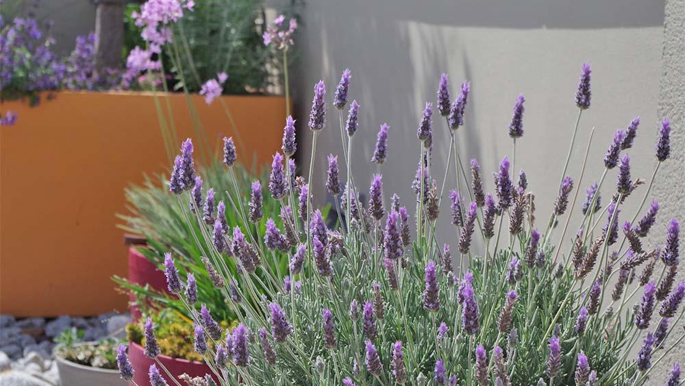 Jardins a una terrassa de Figueres